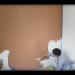 岡山・津山の漆喰リフォームと左官 | 有限会社フジモト工業